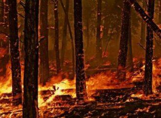 Bando per il ripristino delle foreste incendiate: come accedere ai fondi regionali